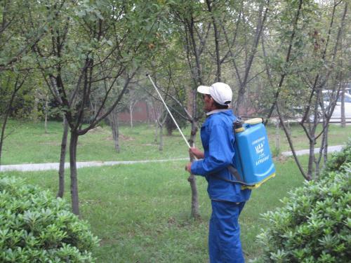 绿化苗木配送销售