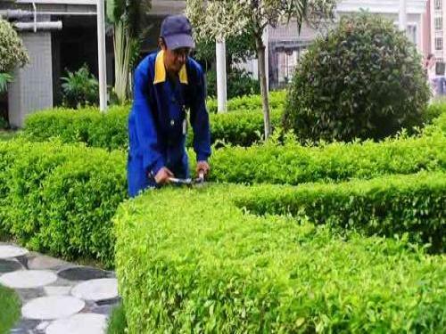 绿化工程竣工验收
